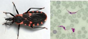 FDA Chagas image